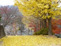 Yataka_park