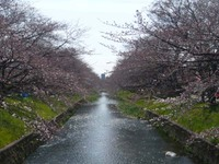 Gozyo_river1