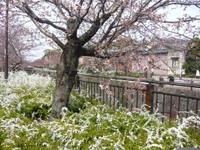 Yamazaki_river