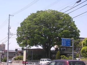 Iida201005201