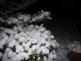 The_snowcovered_garden