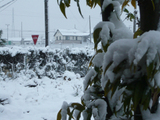 The_snowcovered_garden