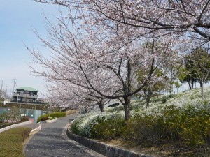 Row_of_sakuras