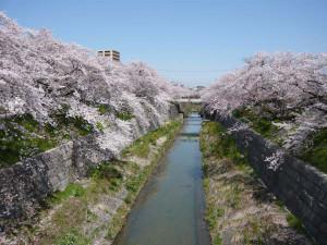 Yamazaki_river5