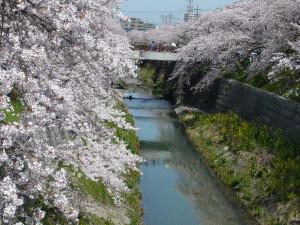 Yamazaki_river6