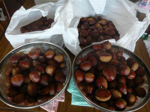 Sweet_roasted_chestnuts1