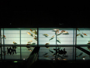 Art_aquarium1