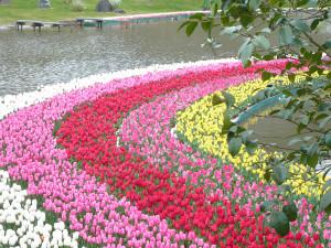 Hamamatsu_flower_park1