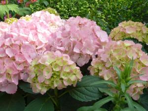 Hamamatsu_flower_park1_2