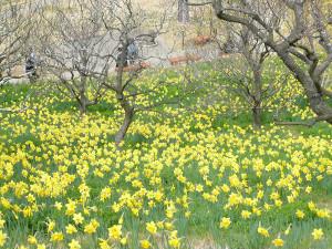 Hamamatsu_flower_park2