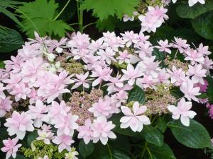 Hamamatsu_flower_park2_2