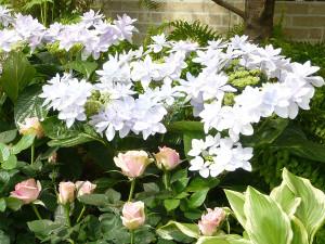 Hamamatsu_flower_park3_2