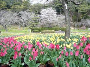Hamamatsu_flower_park4