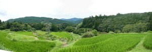 Rice_terrace_of_kurumegi